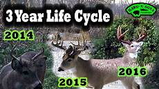 Deer Antler Age Chart Amazing Whitetail Deer Antler Growth Best 3 5 Year Old