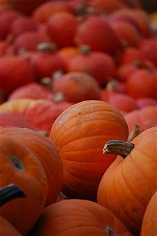 pumpkin iphone wallpaper pumpkins iphone wallpaper idesign iphone