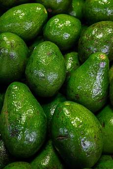 Different Types Of Avocado 17 Different Types Of Avocados