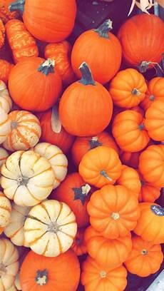 pumpkin iphone wallpaper fall pumpkin wallpaper holidays in 2019 pumpkin