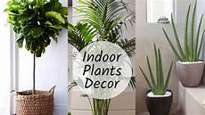 home decoration with plants best indoor plants in india