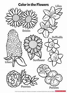 learn about flowers by coloring worksheets printables