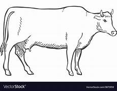 Outline Of Cow Hand Draw Cow Outline Royalty Free Vector Image