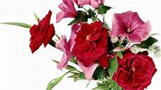 Flower Wallpaper For Laptop by Flowers Laptop Wallpapers Top Free Flowers Laptop