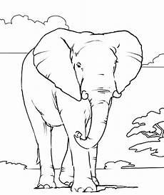 elephant coloring page elephant free