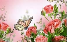 wallpaper flower and butterfly flowers butterflies butterfly soft bokeh j wallpaper