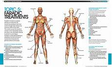 Electrode Placement For Electrical Stimulation Chart Ems 2 Electrode Placement Chart Bodybuilding Google