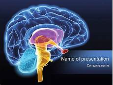 Brain Ppt Templates Human Brain Powerpoint Template Amp Backgrounds Id