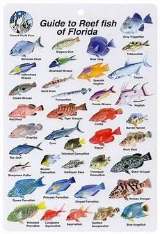 Reef Fish Identification Chart Http Www Puravidadivers Com Pvd2 Wp Content Uploads 2013
