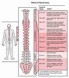 Spinal Levels Chart Disability Discussion Page By Joe Evans