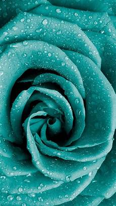 teal flower iphone wallpaper tap and get free app blue flower up