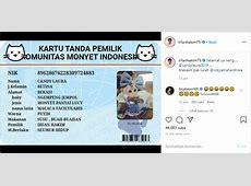 Tak Hanya Populer di Instagram, Monyet Irfan Hakim