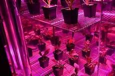 Bml Light Bar Grow Max Spectrum The Grow Lights We Like Wirecutter Reviews A New York