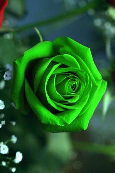 Green Flower Iphone Wallpaper Hd by Green Wallpaper Iphone 2019 3d Iphone Wallpaper