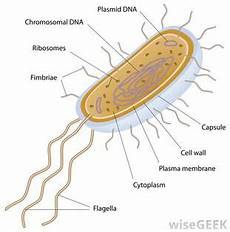 Archaea Examples Archaea Bacteria Biology 11 E Portfolio