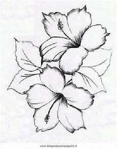 disegno fiori hibiscus drawing at getdrawings free for