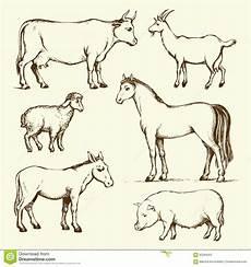 Farm Animal Outlines Farm Animals Vector Drawing Stock Vector Illustration
