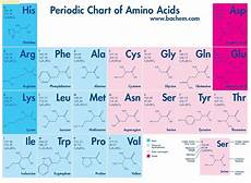 Amino Acid Benefits Chart Amino Acids Chart Google Search Ense 241 Anza De Qu 237 Mica