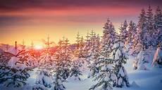 nature snow 4k wallpaper wallpaper pines 5k 4k wallpaper 8k snow sunset
