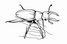 Malvorlagen Insekten Insekten Malvorlagen Malvorlagen1001 De Ausmalbilder