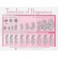 Pregnancy Timeline Chart Timeline Of Pregnancy Tear Pad