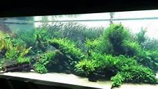 amano aquascape aqua scape takashi amano