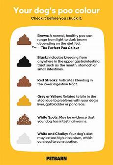 Dog Stool Colour Chart Dog Poo Chart What The Colour Is Telling You Petbarn
