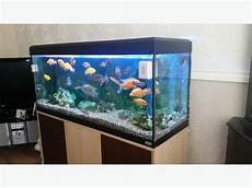 3 Foot Fish Tank Light 4 Foot Fish Tank And Fish Brierley Hill Dudley