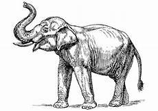 Malvorlage Indischer Elefant Malvorlage Indischer Elefant Kostenlose Ausmalbilder Zum
