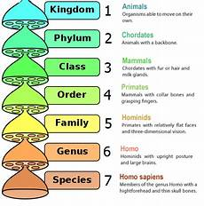 Human Classification Taxonomy Chart Classification Of Living Organisms Biology Notes For