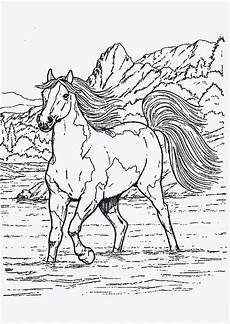 unique ausmalbild pferd mit fohlen f 228 rbung malvorlagen