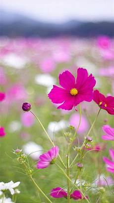 flower wallpaper for cell beautiful flowers htc one wallpaper best htc one wallpapers