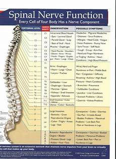 Spinal Levels Chart Examining The Spinal Nerve Chart Neck Support Blog