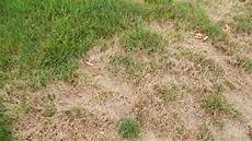 Brown Patch Grass Here Are The Most Common Reasons For Brown Spots On The Lawn