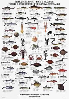 Shellfish Chart Fish And Shellfish Of The North Atlantic La Tene Maps