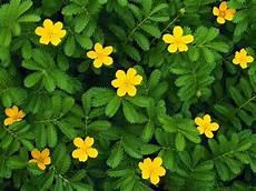 desktop green flower wallpaper yellow flower wallpaper beautiful desktop wallpapers 2014