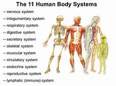 11 Body Systems 11 Human Body Systems Thinglink