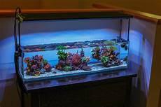 3 Foot Fish Tank Light Best Sps Nano Tank General Discussion Nano Reef Com Forums