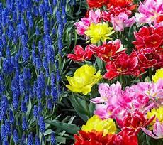flower wallpaper hd flowers for flower beautiful flowers hd wallpapers