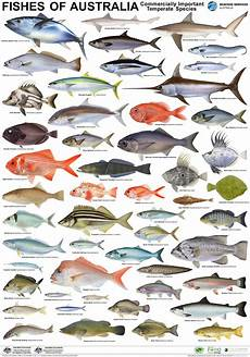 Maine Fish Species Chart Sea Fish Pictures And Names Impremedia Net