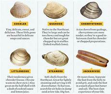 Shellfish Chart Clams Types Chart Of Different Clams Types