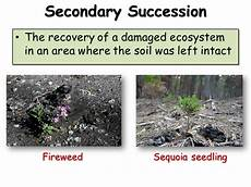 Secondary Succession Succession Presentation Biology Sliderbase