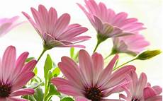 flower images hd wallpapers hd wallpapers beautiful pictures wallpaper 21761369