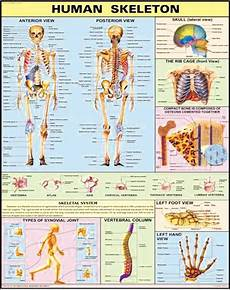 Educational Charts Manufacturers In India 30x40 Educational Charts Manufacturer In New Delhi Delhi