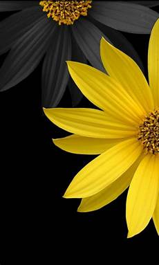 iphone wallpaper yellow black windows phone 7 480 215 800 hd wallpapers 07 yellow flowers