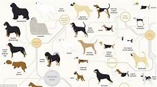 Dog Name Chart The Family Tree Of Dogs Infographic Reveals How Every