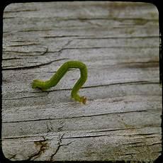The Inchworm Inchworm On Betfair Jared Tendler