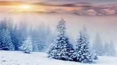 nature snow 4k wallpaper wallpaper trees 5k 4k wallpaper pines mountains snow