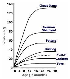 French Bulldog Growth Chart Australian Shepherd Puppy Growth Chart Goldenacresdogs Com