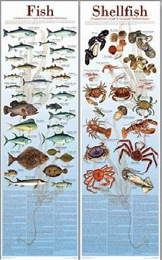 Shellfish Chart Sustainable Fish And Shellfish Posters A Seafood Lover S